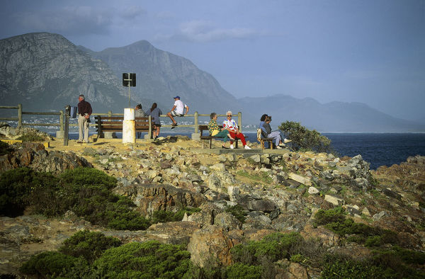 ALA00622. Whalewatchers on the Whale Coast, Hermanus, Cape Province, South Africa