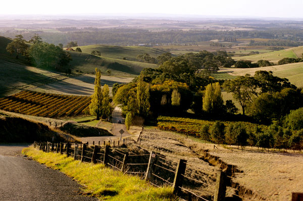 Barossa Valley seen from a country road. The Barossa Valley is a major wine-producing region 60 km northeast of Adelaide. South Australia