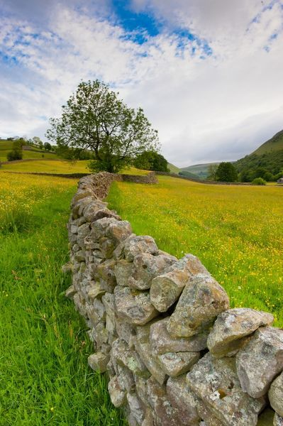 Drystone wall between meadows with abundant wildflowers. Muker, Swaledale, Yorkshire Dales National Park, North Yorkshire, England