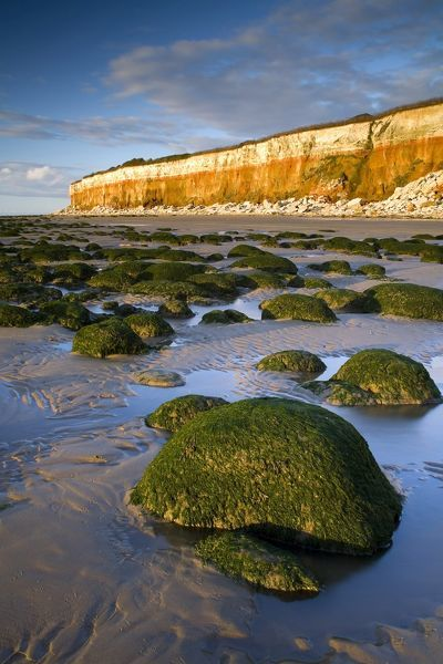 Hunstanton Cliffs with stratified Red Chalk and underlying Carstone laid down in the Lower Cretaceous epoch, with Upper Cretaceous white chalk on top. with weed-covered rounded boulders at low tide, at sunset. Norfolk, England