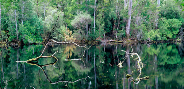 Lake Chisholm surrounded by dense forest. Lake Chisholm Forest Reserve, northwestern Tasmania, Australia