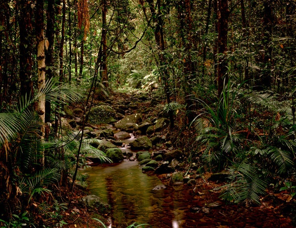 Lowland tropical rainforest, Mossman Gorge section, Daintree National Park, Queensland, Australia