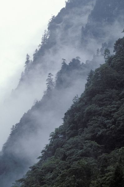 Precipitous mountainside with mist clinging to the conifer forest, in an area flanking the Tibetan Plateau that has some of the worlds highest and steepest mountains