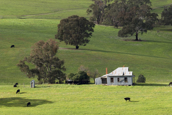 Rural scene: pasture and a small house after rain. Southwest Slopes, New South Wales, Australia