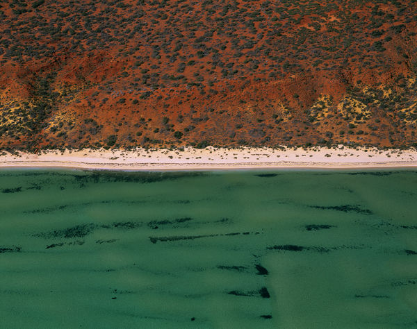 Seagrass beds, dugong habitat in Herald Bight, from the air. Shark Bay, Peron Peninsula, Western Australia
