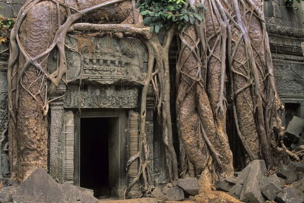 Silk cotton tree (Bombax sp.), roots framing a doorway of the Ta Prohm Temple, Angkor, Cambodia