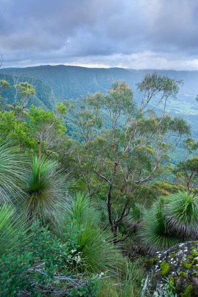 Vista from the Pinnacles Lookout, Border Ranges National Park, New South Wales, Australia