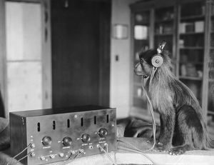 1923: Jock the monkey listens in on the Scopes Trial verdict
