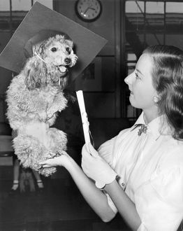 1952: toy poodle named Waldorf sitting in his mistressa€™s hand