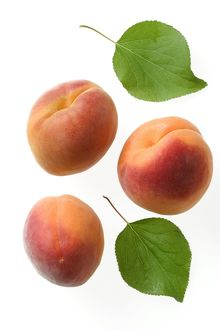 Apricots and their leaves (Prunus persica)