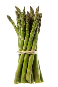 Bunch of Asparagus (Asparagus officinalis)