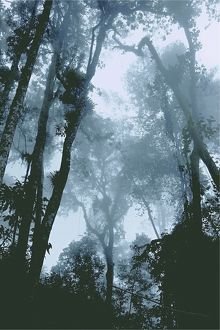 Cloud forest,