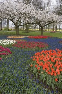 Display of Tulips and Hyacinths