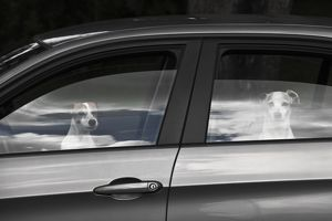 Dogs inside car with windows open,