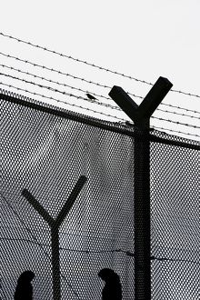 Fence at a women's prison at Frovi