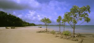 Franjipani Beach with mangroves,