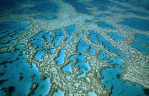 Hardy Reef: coral formations,