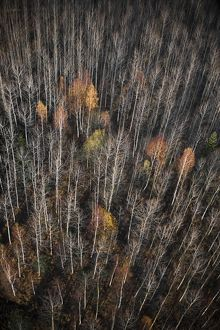 High angle view of forest in autumn,