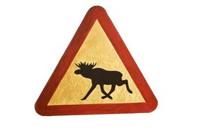 Home made sign warning of Eurasian elk crossing (Alces alces)