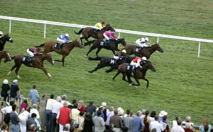 Horse race in progress (Equus caballus)