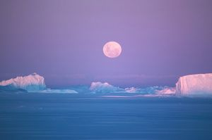 Icebergs and sea ice at moonrise.