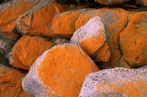 Lichen-covered boulders