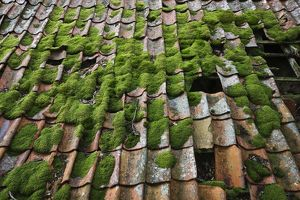 Moss-covered terracotta roof tiles,