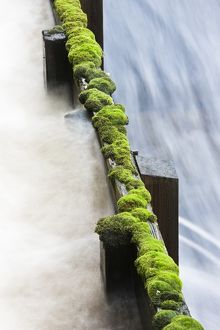 Moss growing at edge of water trough with swiftly flowing stream sluicing through,