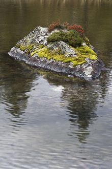 Mosses growing on rock in lake,