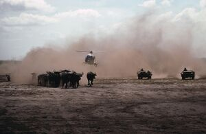 Mustering wild buffalo by helicopter