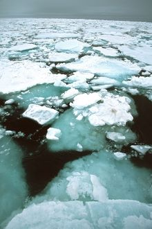 Pack ice in the Arctic Circle,