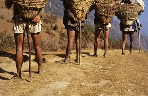 Porters on the trail, with T-shaped walking sticks, used to support the load at frequent intervals on steep slopes.