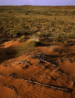 Sand dunes along Canning Stock Route,