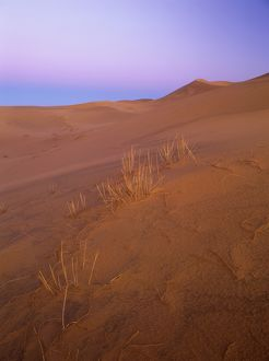 Sand dunes at dawn,