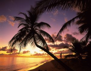 Silhouette of palm trees at sunset,