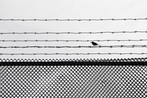 Small bird perched on fence at a women's prison at Frovi