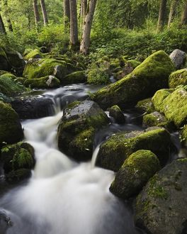 Stream running through primeval forest,