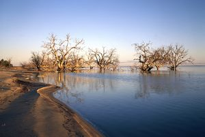 Submerged trees in Menindee Lakes,