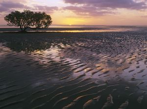 Sunrise over mudflats.