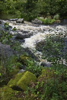 Sverkesta River flowing through temperate forest,