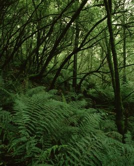 Temperate rainforest,