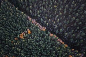 View of dense forest from hot air balloon,