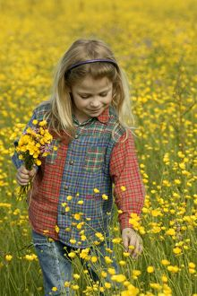 Young girl picking Buttercups (Ranunculus sp.)
