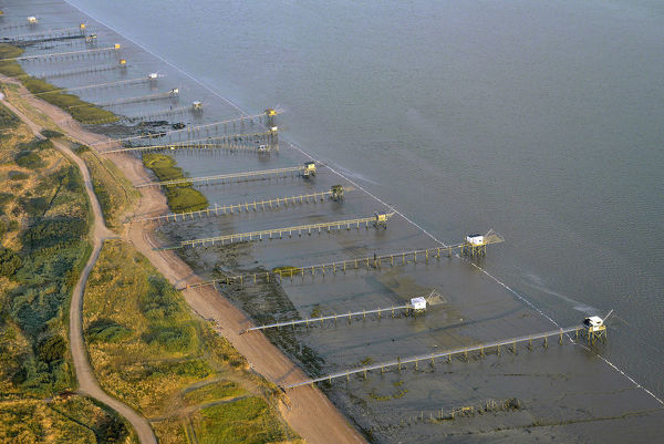Aerial view of lift nets at low tide, a traditional fishing method using nets that are submerged then raised, trapping fish or crustaceans sometimes enticed by lights or bait. Loire-Atlantique, western France