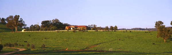 Cattle property,New England region, New South Wales, Australia
