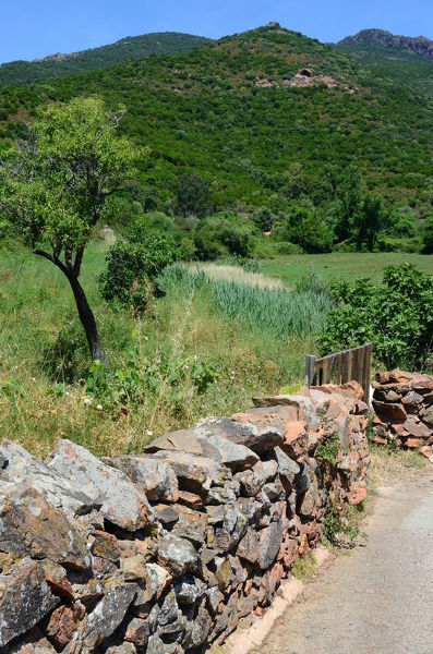 Lane and drystone wall in Corsican countryside in summer. Corsica, France