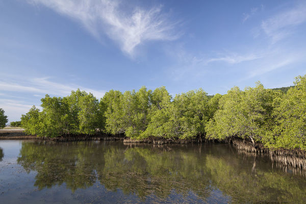 Mangrove forest reflected in the still water of an inlet