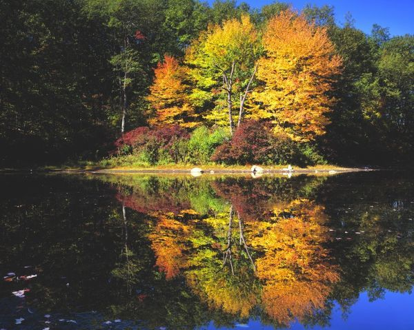 Reflection of trees in autumn colour in Walden Pond
