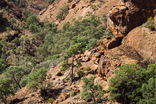 Slopes above Homestead Gorge with vegetation adapted for survival in the extreme conditions of inland arid Australia. Mutawintji National Park, land of Malyankapa and Pandjikali Aboriginal people, western New South Wales, Australia