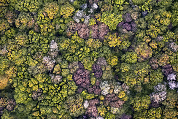 View from directly above of deciduous temperate forest in spring. Picardy, France